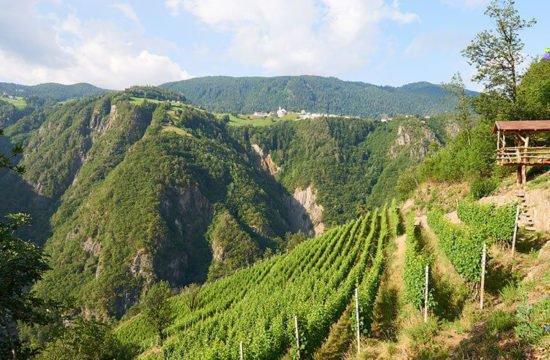 Wine Farm Prackfol 1