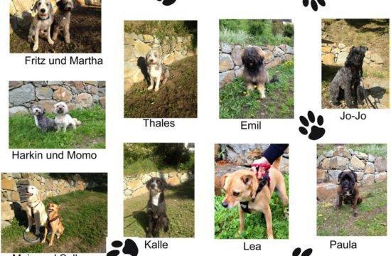 Hundeparadies im Herzen der Dolomiten