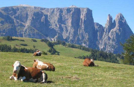 Farm Prackfolerhof - Fiè allo Sciliar 2
