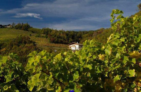 Weinhof Prackfol in Völs am Schlern