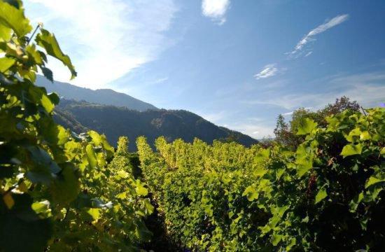 Wine Farm Prackfol 5