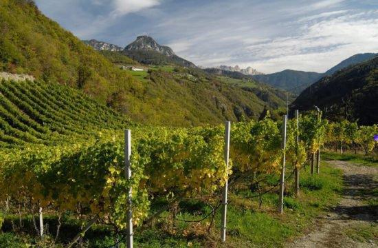 Wine Farm Prackfol 6