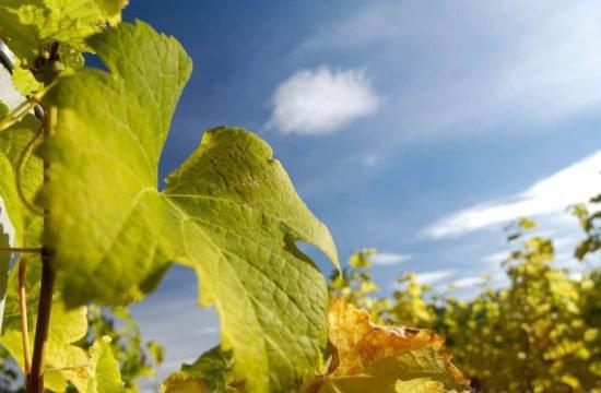 Wine Farm Prackfol 7