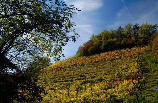 Wine Farm Prackfol 8