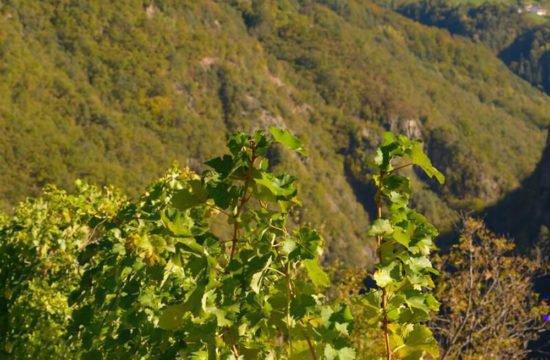 Wine Farm Prackfol 9