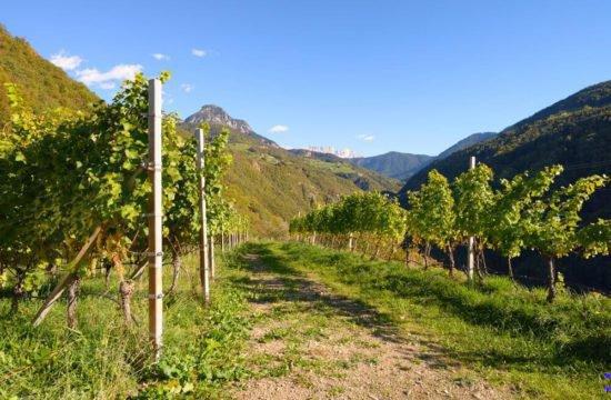 Wine Farm Prackfol 10