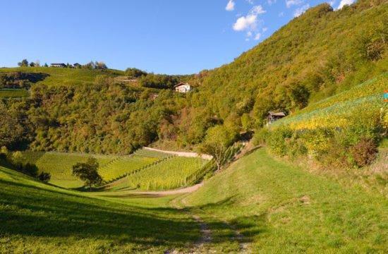 Wine Farm Prackfol 12
