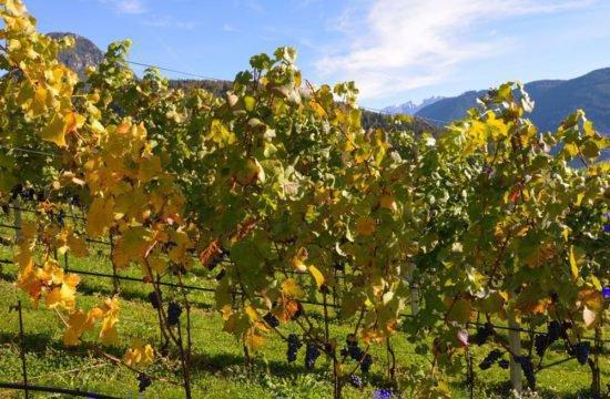 Wine Farm Prackfol 13