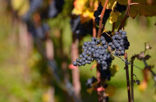 Wine Farm Prackfol 14