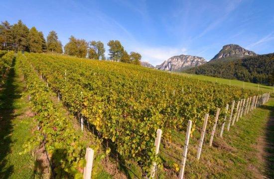 Wine Farm Prackfol 15