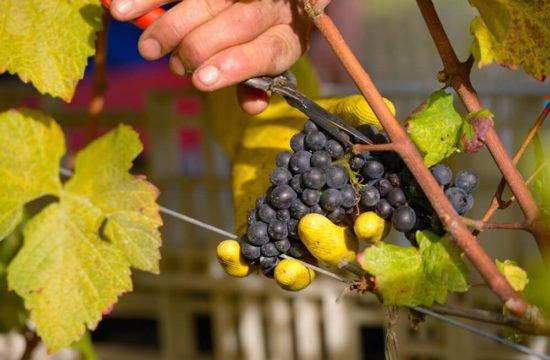 Wine Farm Prackfol 16