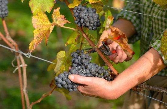 Wine Farm Prackfol 17