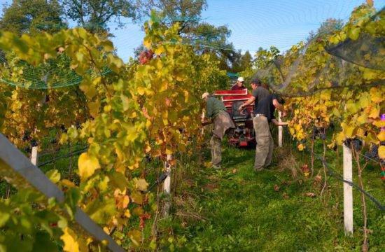 Wine Farm Prackfol 18