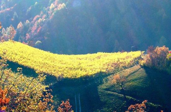 Wine Farm Prackfol 19