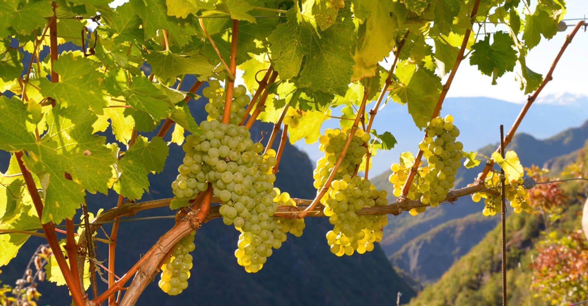 Weinhof Prackfol in Völs am Schlern 7